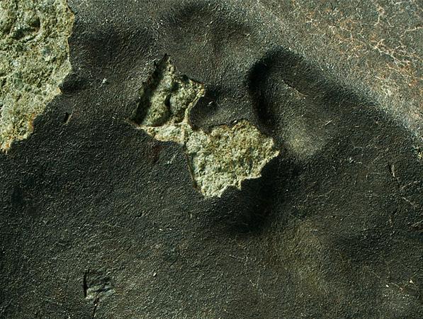 Meteorite Fusion Crust